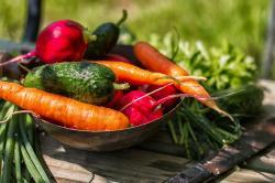 Bio, Vegan, Raw, GMO – co znamenají jednotlivé zkratky?