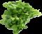 bylinky logo